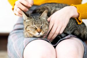 水素水を飲んで熟睡の猫